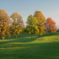 Colours of autumn, tree images