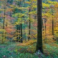 Colourful Slovenia